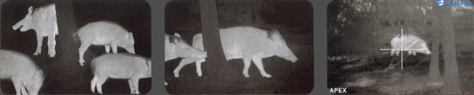 Thermal night vision view comparison